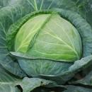 Водорастворимые удобрения для капусты