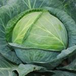 Схема применения Новалон Фолиар (Novalon Foliar) для листовой подкормки капусты
