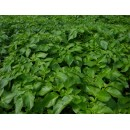Водорастворимые удобрения для картофеля