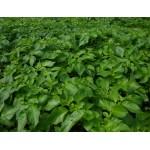 Схема применения Новалон и Новалон Фолиар (Novalon Foliar) для фертигации и листовой подкормки картофеля