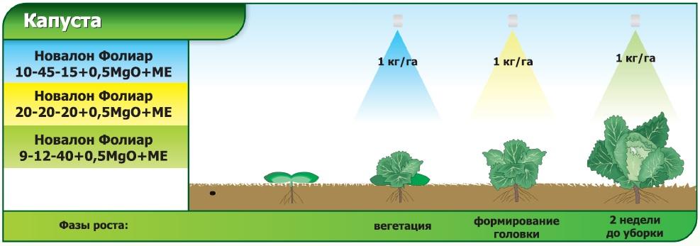 Схма применения Новалон Фолиар для листовой подкормки для капусты