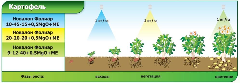 Схема применения удобрений Новалон фолиар для картофеля, удобрение под картошку